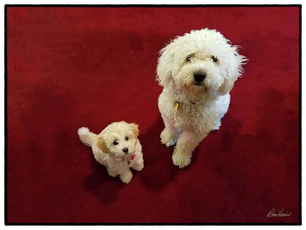 Photograph - Big Dog, Little Dog by Diana Haronis