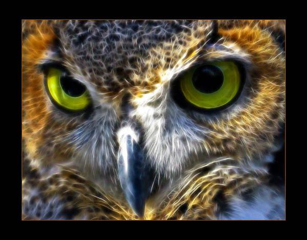 Different Animals Photograph - Big Eyes by Ricky Barnard