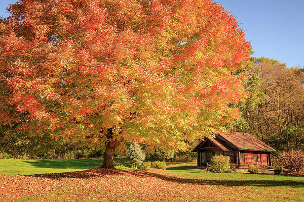 Wall Art - Photograph - Big Fall Tree By A Cabin by Joni Eskridge