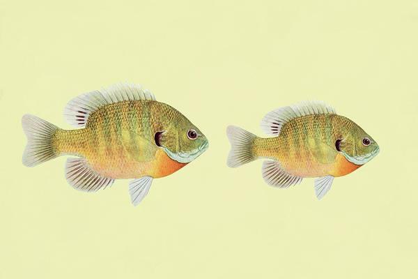 Mixed Media - Big Fish Little Fish  by Isabella Howard