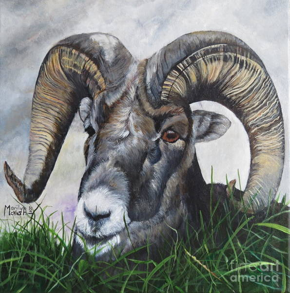 Painting - Big Horned Sheep by Marilyn McNish