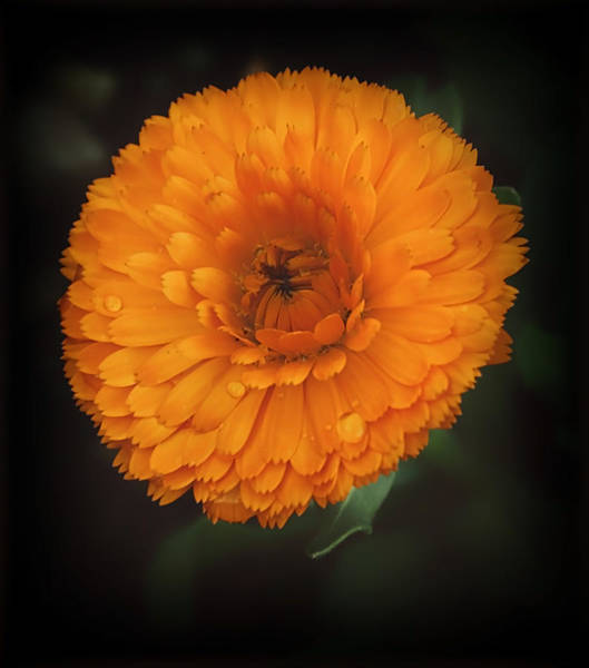 Photograph - Big N Orange by Elaine Malott