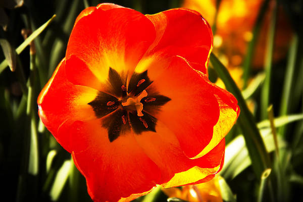 Wall Art - Photograph - Big Orange Flower by Frank Savarese