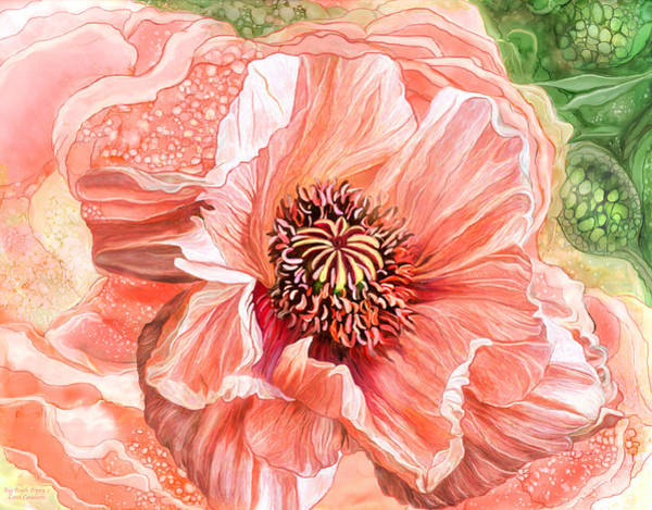 Mixed Media - Big Peach Poppy 2 by Carol Cavalaris