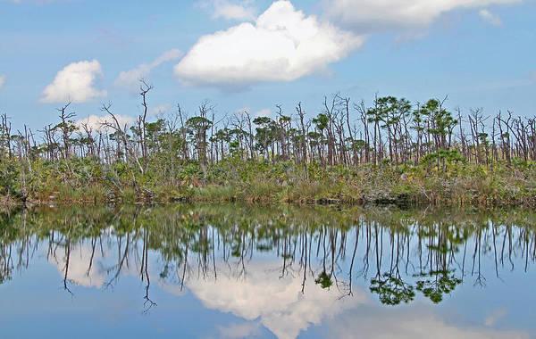 Photograph - Big Pine Key Pond by Bob Slitzan