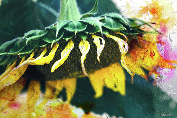Photograph - Big Sunflower Abstract by Anna Louise