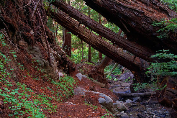 Photograph - Big Sur Redwood Canyon by Charlene Mitchell