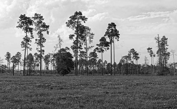 Thicket Photograph - Big Thicket National Preserve Texas by Mountain Dreams