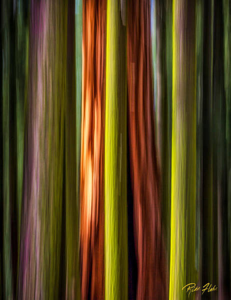 Photograph - Big Trees Abstract by Rikk Flohr
