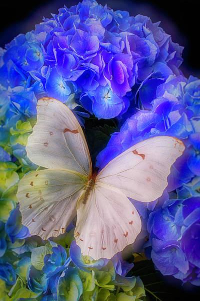 Big White Butterfly Art Print