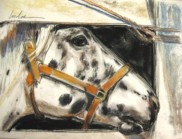 Appaloosa Drawing - Bigger Spaces by Indra Singh