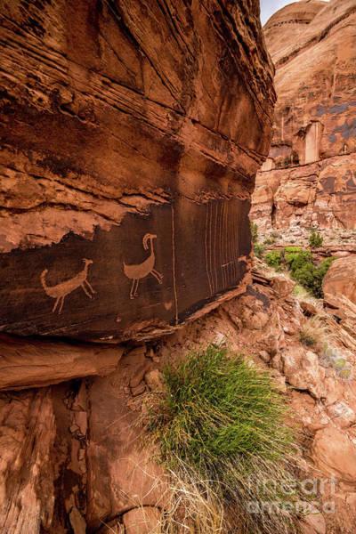 Sheep Rock Wall Art - Photograph - Bighorn Sheep Petroglyph - Moab Canyon - Utah  by Gary Whitton