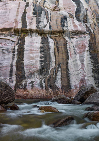 Wall Art - Photograph - Bighorn Textures by Leland D Howard