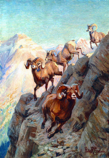 Upland Wall Art - Painting - Bighorns by Philip R Goodwin