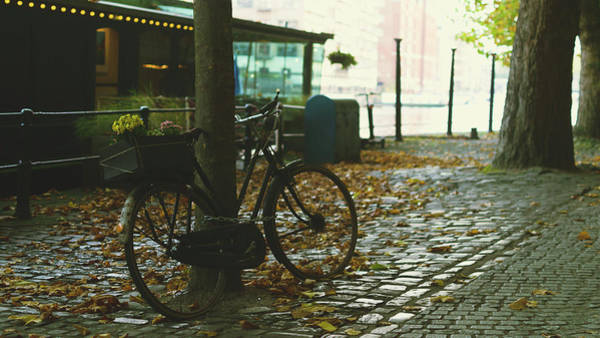 Photograph - Bike Chained To A Tree by Jacek Wojnarowski
