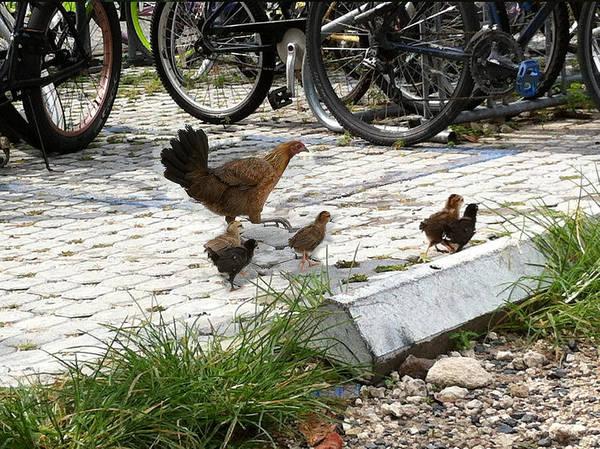 Photograph - Biker Chicks by Karen Zuk Rosenblatt