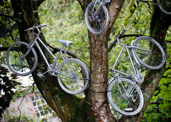 Photograph - Bikes In A Tree by Helen Northcott