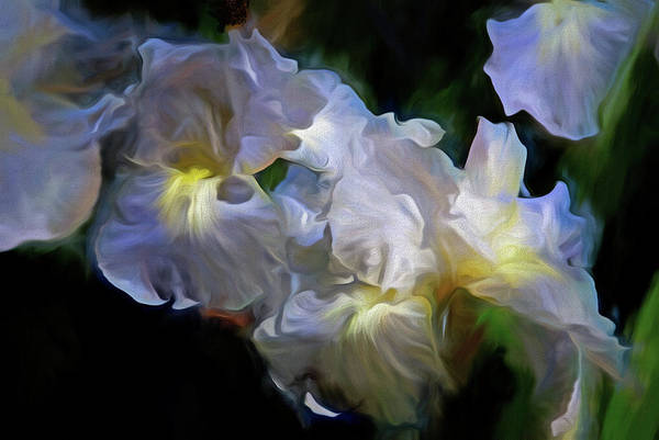 Mixed Media - Billowing Irises by Lynda Lehmann