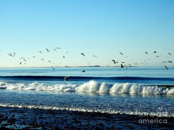 Photograph - Billowing White Waves And Seagulls by Delores Malcomson