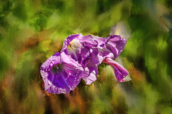 Photograph - Bindweed Coloured #h8 by Leif Sohlman