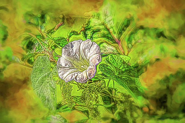 Photograph - Bindweed #d6 by Leif Sohlman
