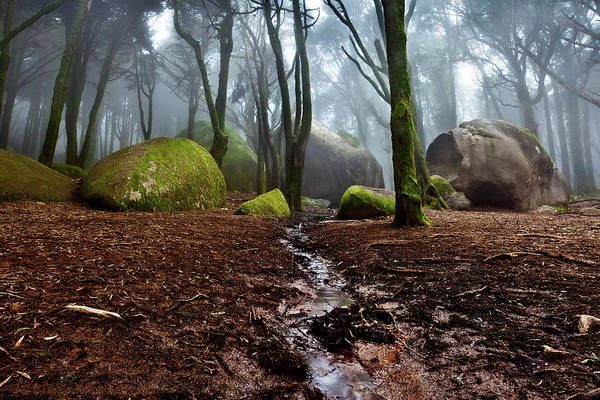 Sintra Photograph - Biosphere by Jorge Maia