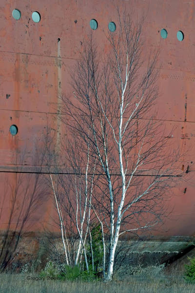Freighter Photograph - Birch And Ship by Gregory Steele