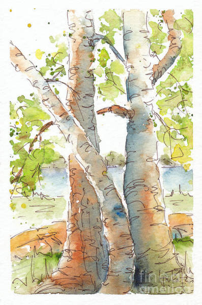Painting - Birch Buddies by Pat Katz