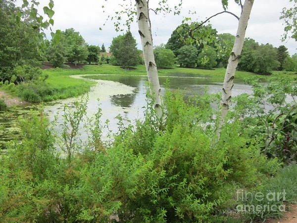 Photograph - Birch By The Water by Kathie Chicoine
