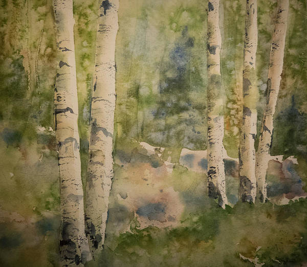 Painting - Birch Forest by Terry Ann Morris