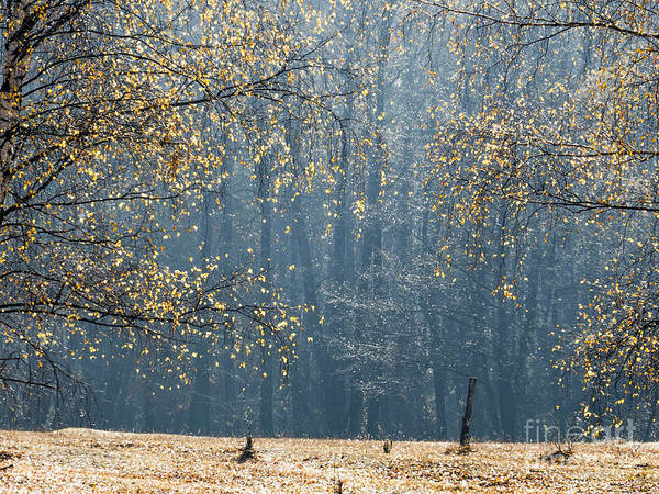Photograph - Birch Forest To The Morning Sun by Odon Czintos
