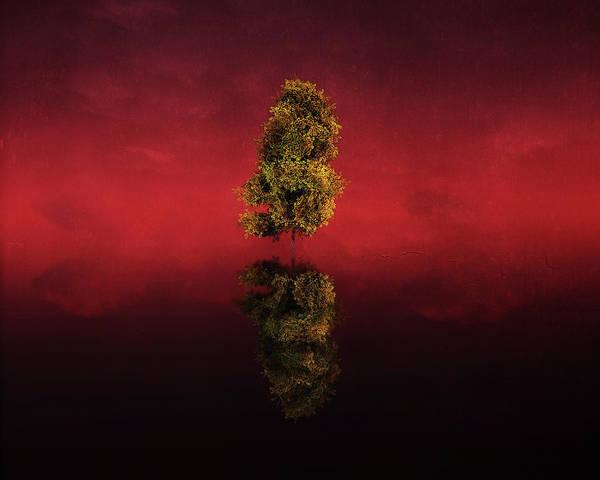 Digital Art - Birch In A Red Landscape by Jan Keteleer