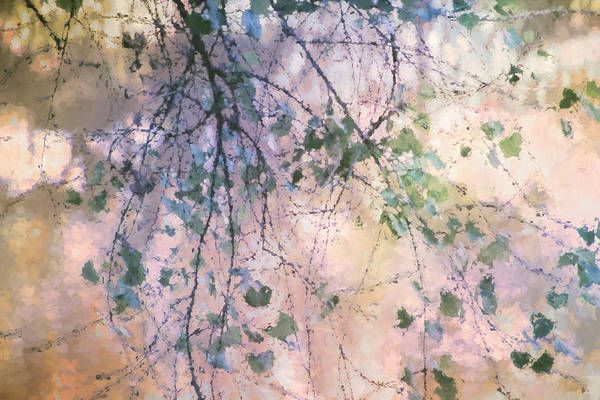 Twig Mixed Media - Birch In Spring by Terry Davis