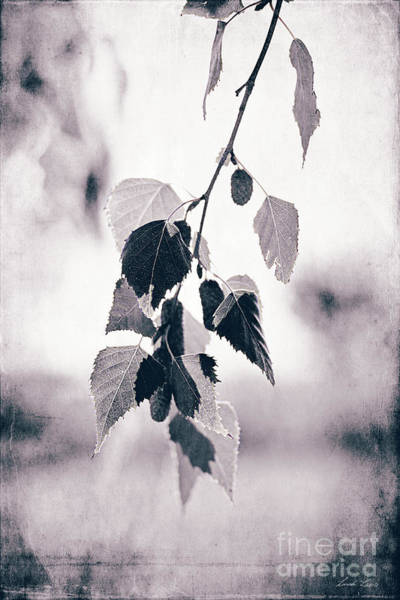 Wall Art - Photograph - Birch by Linda Lees