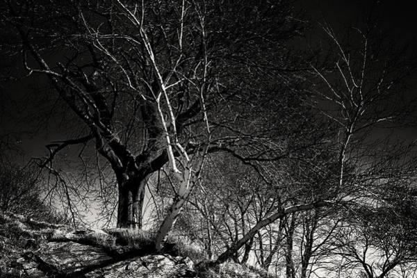 Photograph - Birch Tree On Beach Bluff by Jeff Folger