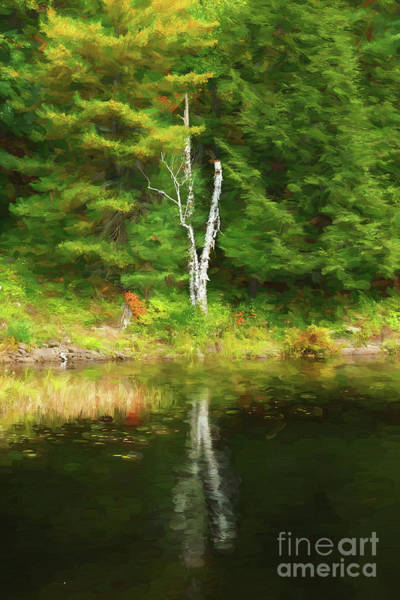 Photograph - Birch Tree Reflection - Painterly by Les Palenik