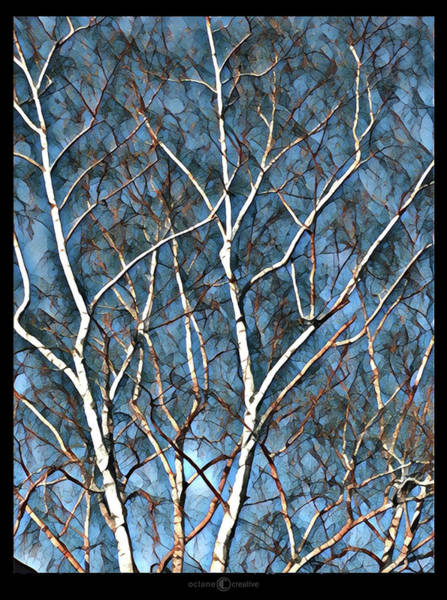 Photograph - Birch Tree by Tim Nyberg