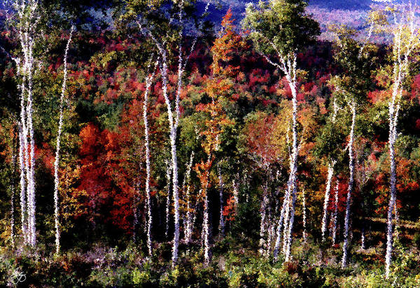 Photograph - Birches Against Color by Wayne King