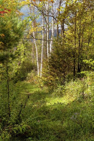 Photograph - Birches On An Autumn Path by Tom Singleton