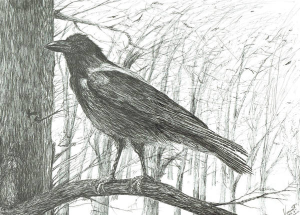 Wall Art - Drawing - Bird, 2011 by Vincent Alexander Booth