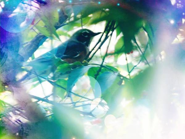 Photograph - Bird And Blue by Deborah Kunesh