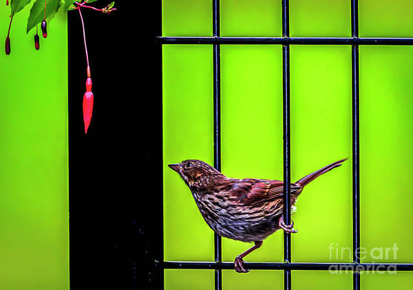 Photograph - Bird And Red Fuchsia Flower by Sal Ahmed