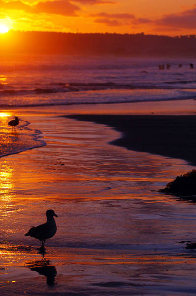 Photograph - Bird At Sunset by Jill Reger