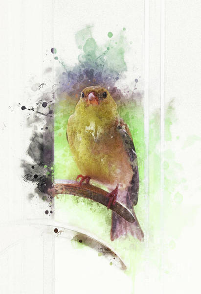Wall Art - Digital Art - Bird At The Door by Mary Machare