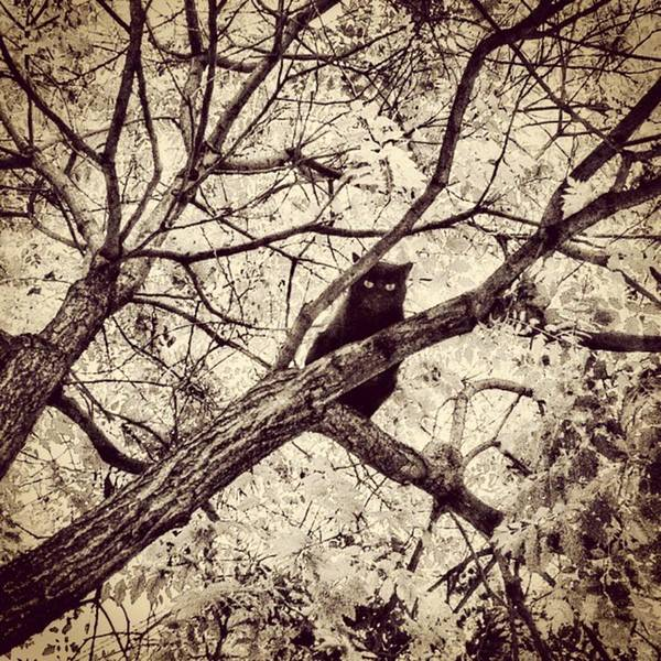 Wall Art - Photograph - Bird-cat II by Rafa Rivas