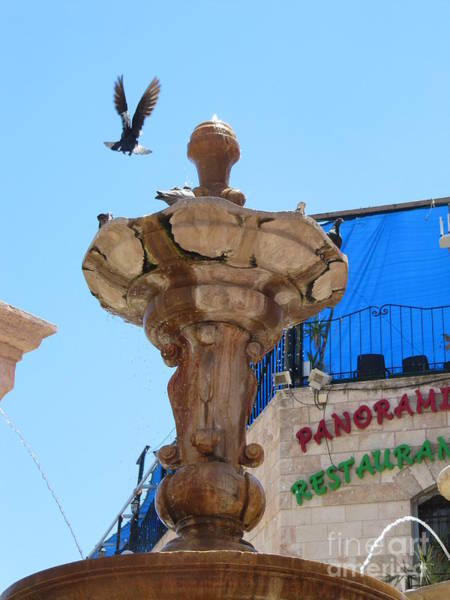 Photograph - Bird Dancer Old Jerusalem Market by Donna L Munro