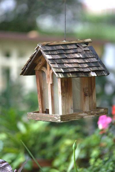 Photograph - Bird Feeder In A Garden by Gordon Elwell