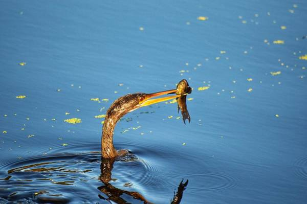 Photograph - Bird Fishing by Joseph Caban