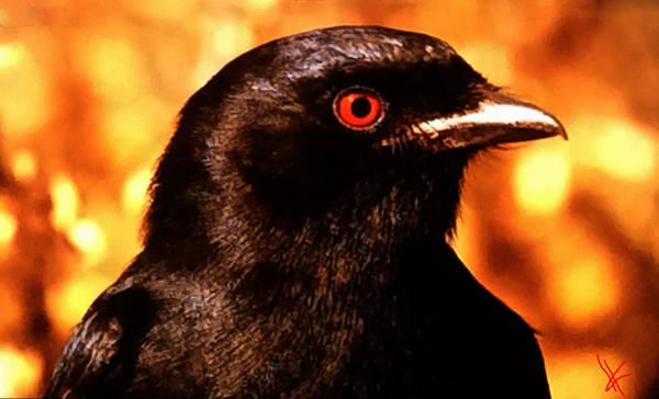 Photograph - Bird Friend  by Colette V Hera  Guggenheim