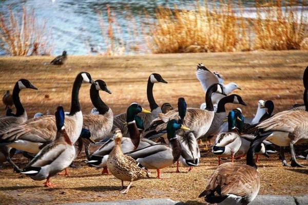 Photograph - Bird Gang Wars by Sumoflam Photography